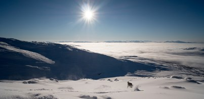 Skiing Holidays in Sweden 2020 - 2021